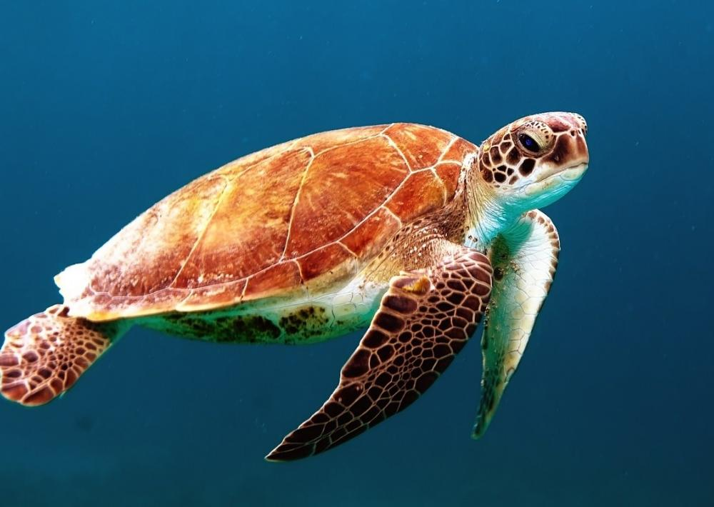 Truth Everybody Ought Into Learn About Mud Turtles For Sale