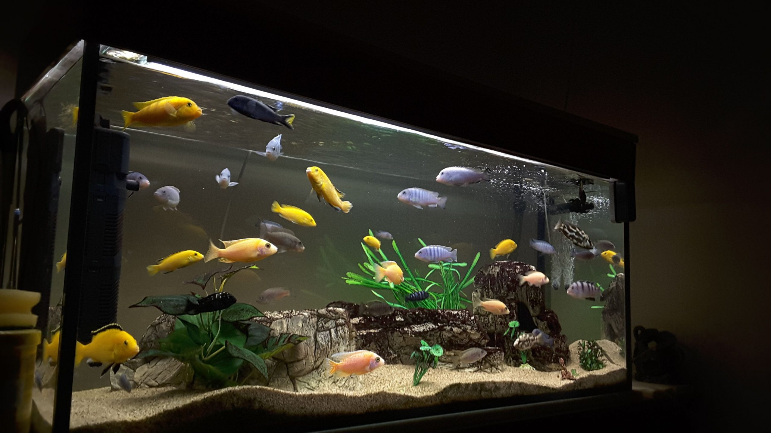 One Incredibly Powerful Strategy To Fish Aquarium